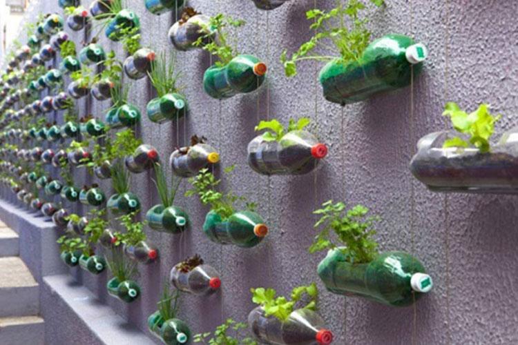 bottiglie-riciclo-bottiglie-muro-piant