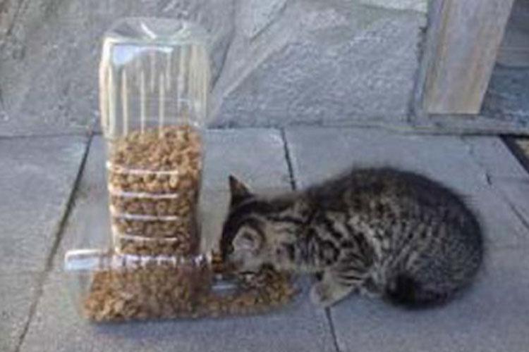 bottiglie-riciclo-dispenser-animali