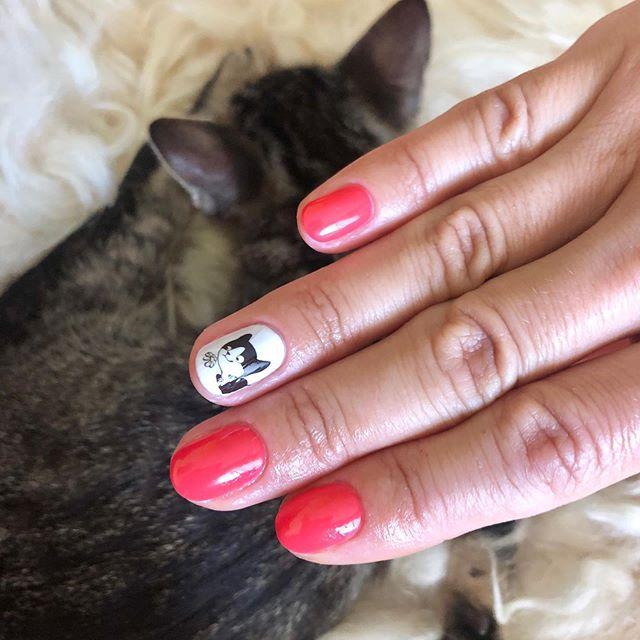 Manicure con i gatti