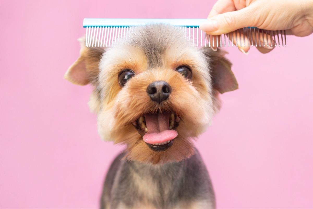 cane parrucchiere